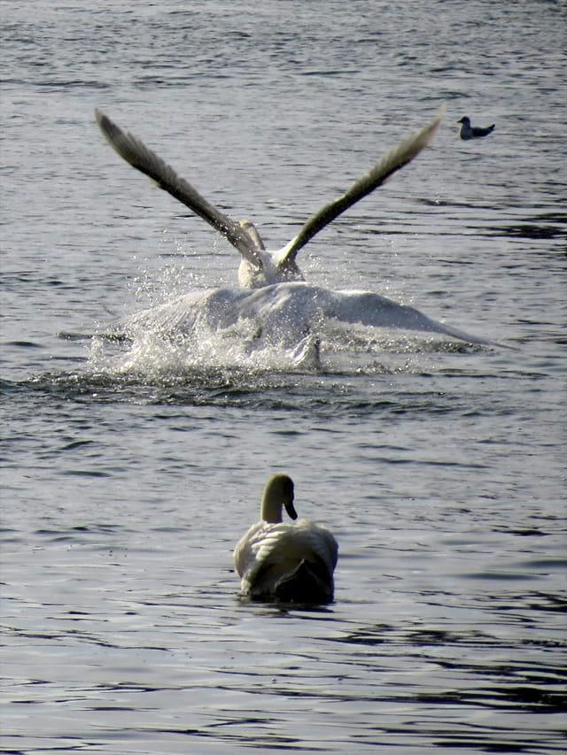 Vol à 4 ailes