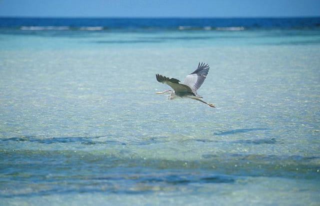 Vol au dessus d'un banc de poissons