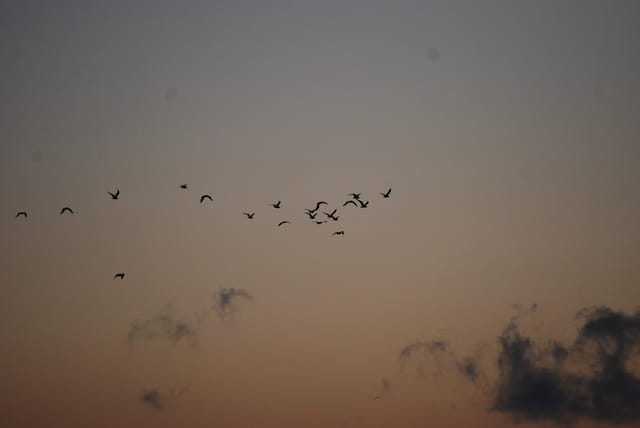 vol d'oiseaux dans le coucher de soleil