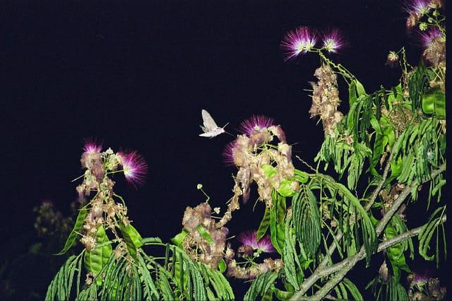 Vol de nuit du sphinx