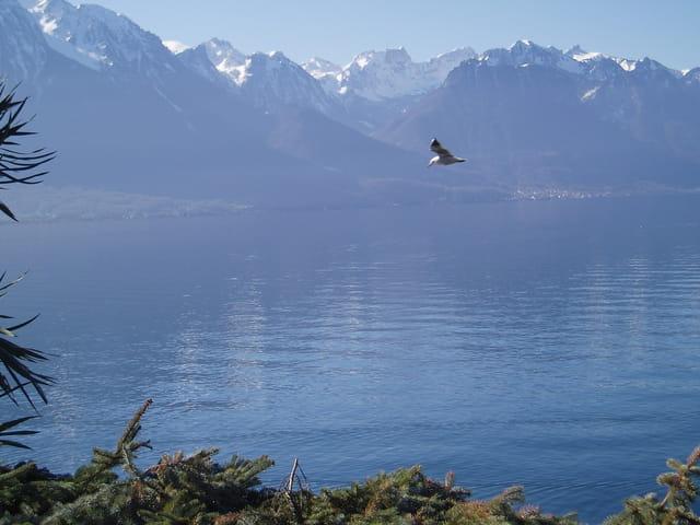 Vol sur le lac Léman