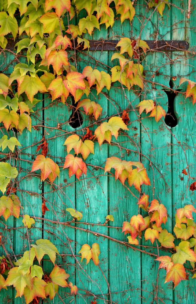 Volet d'automne