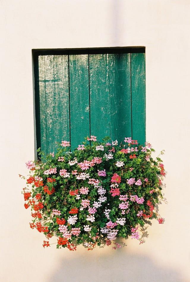 Volet sur fleurs