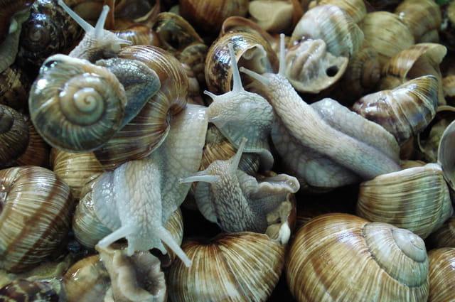 Vrac d'escargots