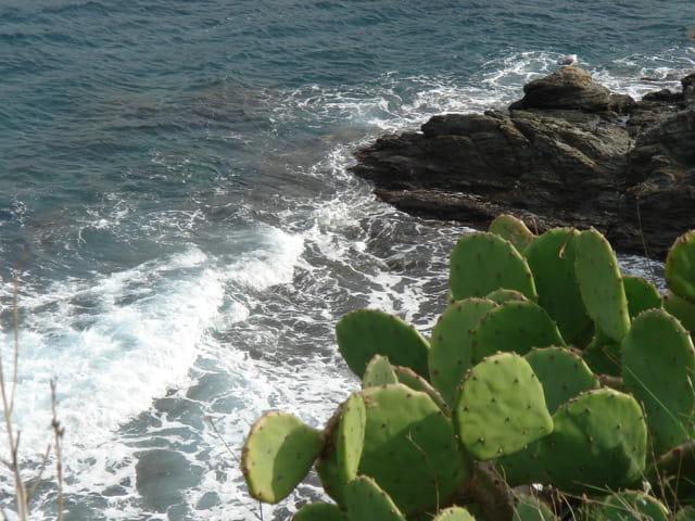 Vue de Banyuls-sur-Mer