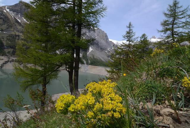 Vue des montagnes Valaisannes