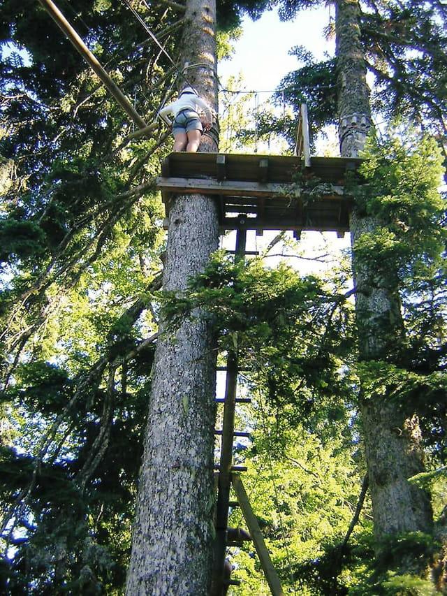Vue du haut de l'arbre