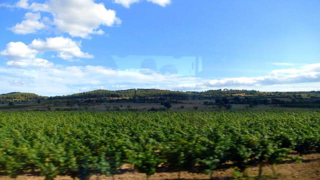 Vue sur les vignes du Languedoc Roussillon