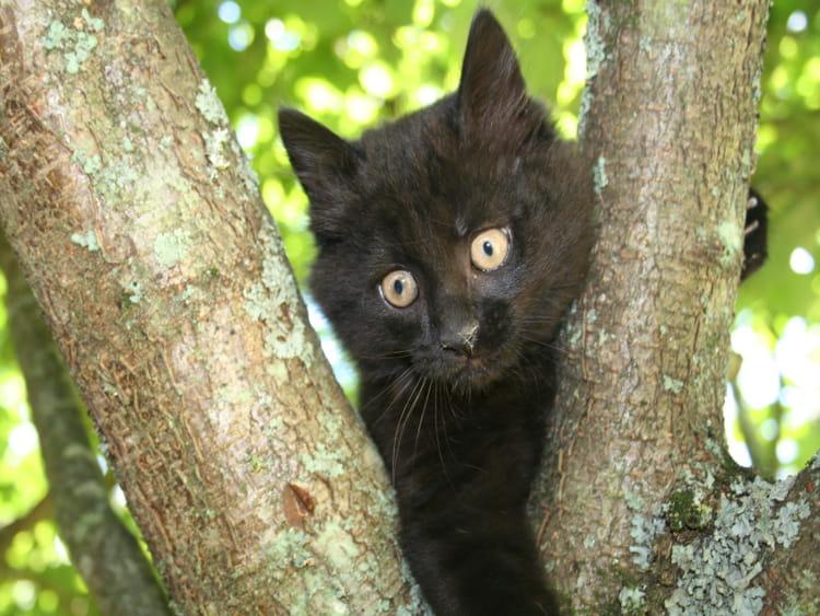 chat noir dans l 39 arbre par c cile pledel sur l 39 internaute. Black Bedroom Furniture Sets. Home Design Ideas