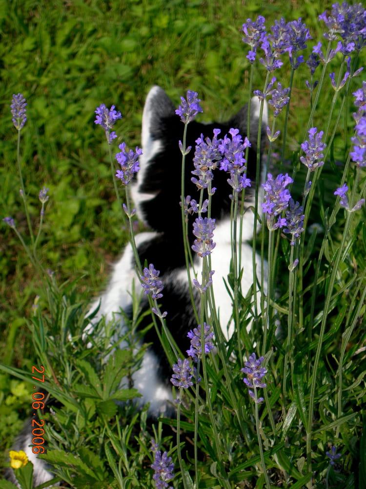 Nos Amis Les Chats Que Planter Au Jardin Pour Son Chat