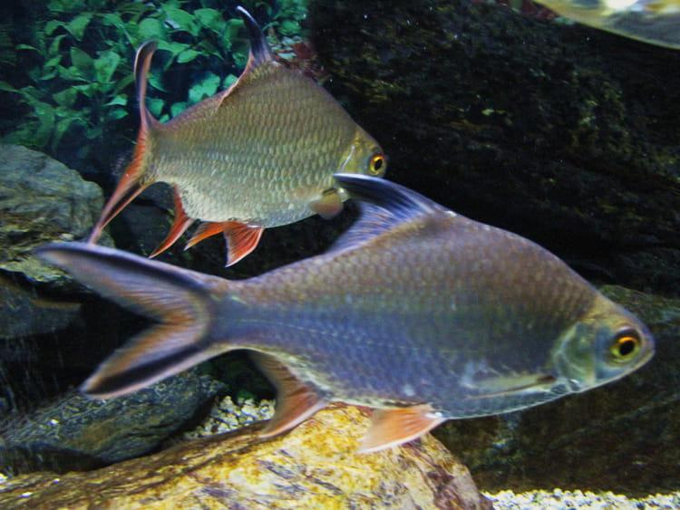 poissons tropicaux aquarium tropical de pierrefitte