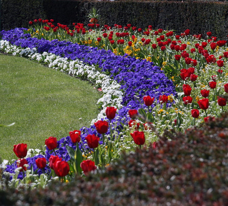 parterre de fleurs par patrick le coz sur l 39 internaute. Black Bedroom Furniture Sets. Home Design Ideas