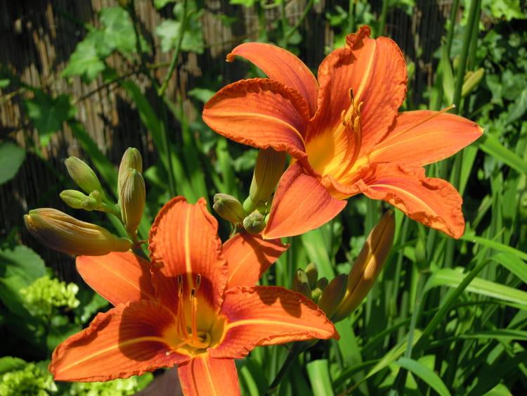 fleur orange par florian delhoulle sur l 39 internaute. Black Bedroom Furniture Sets. Home Design Ideas
