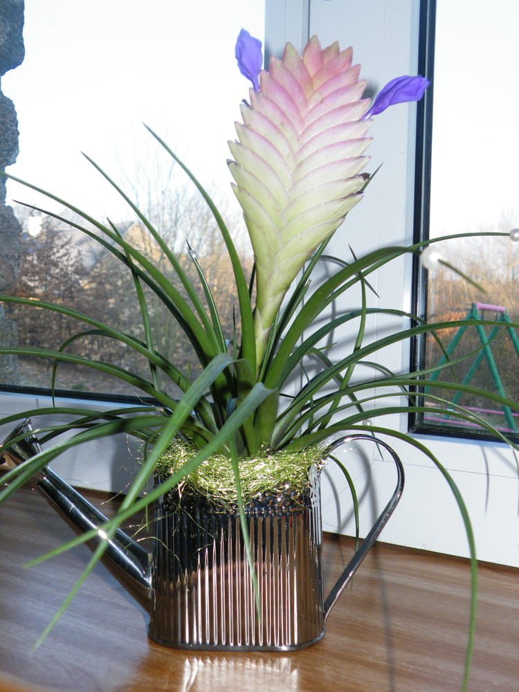 fleurs violettes par janine moreau sur l 39 internaute. Black Bedroom Furniture Sets. Home Design Ideas