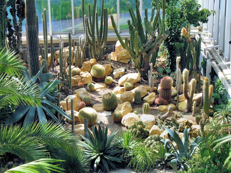 Plantes exotiques par christiane pichard sur l 39 internaute for Plantes exotiques