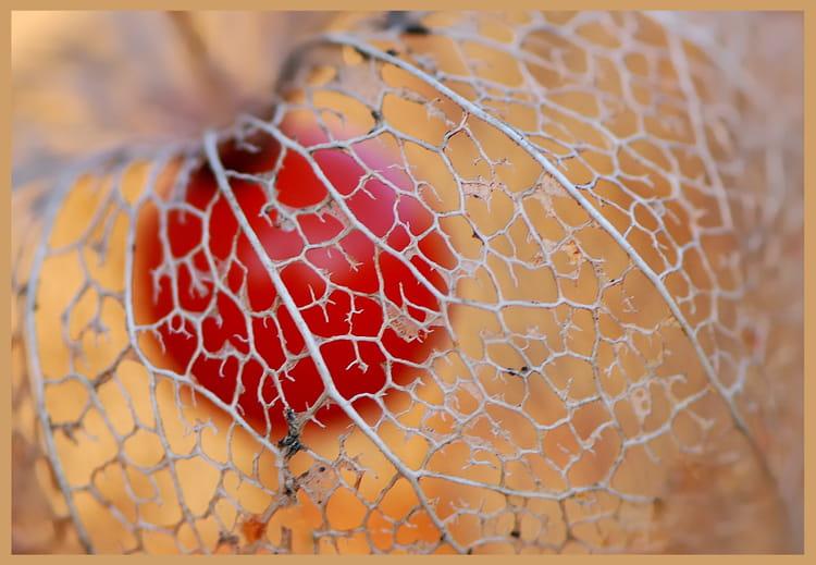 Amour en cage par christelle milesi sur l 39 internaute - Fruit cage d amour ...