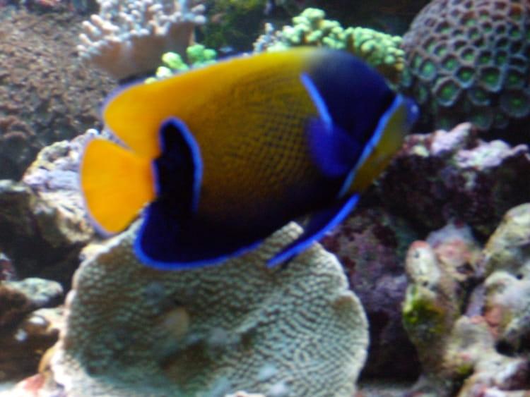 aquarium zoo d amn 233 ville par colette bassand sur l internaute