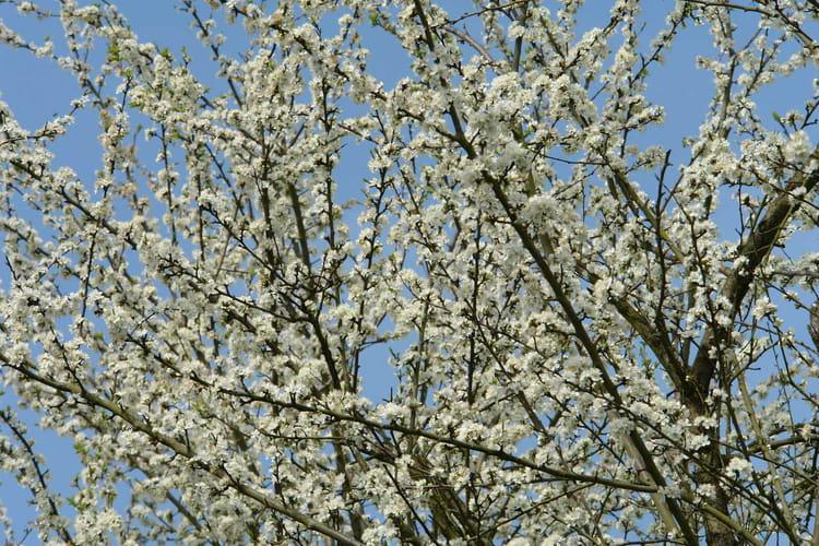 arbre en fleur par eric rinn sur l 39 internaute. Black Bedroom Furniture Sets. Home Design Ideas