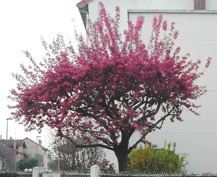 Arbre en par rita vogels sur l 39 internaute - Arbre fleurs rouges printemps ...