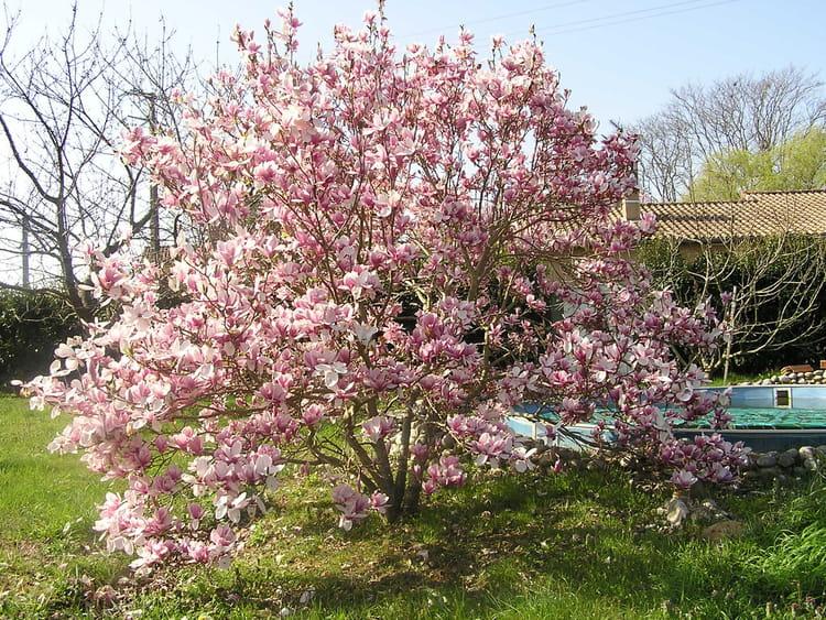 arbre en fleurs par jean paul mateo mat o sur l 39 internaute. Black Bedroom Furniture Sets. Home Design Ideas