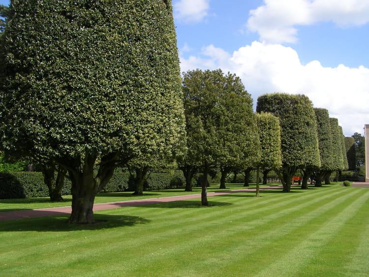 arbres agr u00e9mentant les pelouses du cimeti u00e8re am u00e9ricain de normandie par helena duhoo sur l