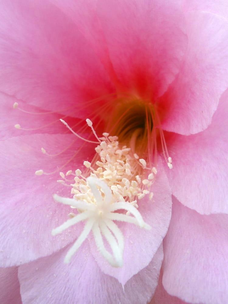 Au coeur de la fleur par malou troel sur l 39 internaute - Fleur au coeur noir ...