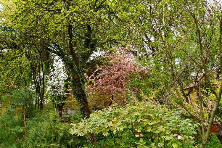 Au jardin botanique par ildiko lorinszky sur l 39 internaute for Bd du jardin botanique