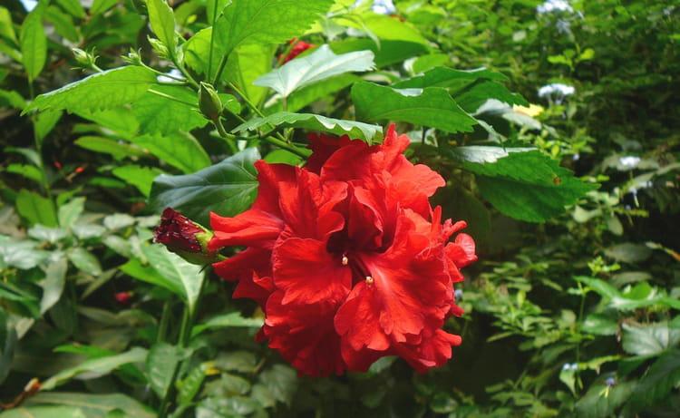 Au paradis des plantes 11 par jacqueline dubois sur l for Plante ulysse