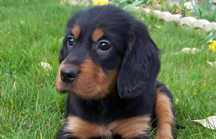 B b chien par isabelle langlais sur l 39 internaute - Image bebe chien ...
