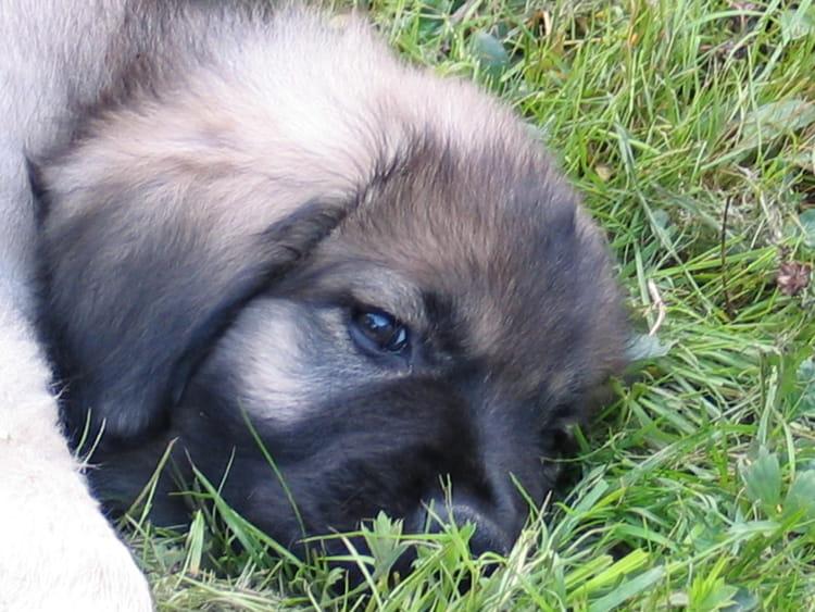 B b chien par nicole hirigoyen sur l 39 internaute - Image bebe chien ...