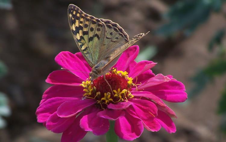 Belle fleur et joli papillon par denise ribeiro sur l - Image papillon et fleur ...