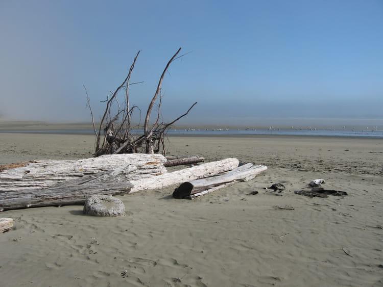 Bois flott sur une plage du pacific rim par fabienne fobe for Recherche bois flotte