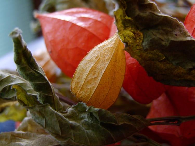 Bouquet d 39 automne par jean luc blec sur l 39 internaute - Bouquet d automne ...