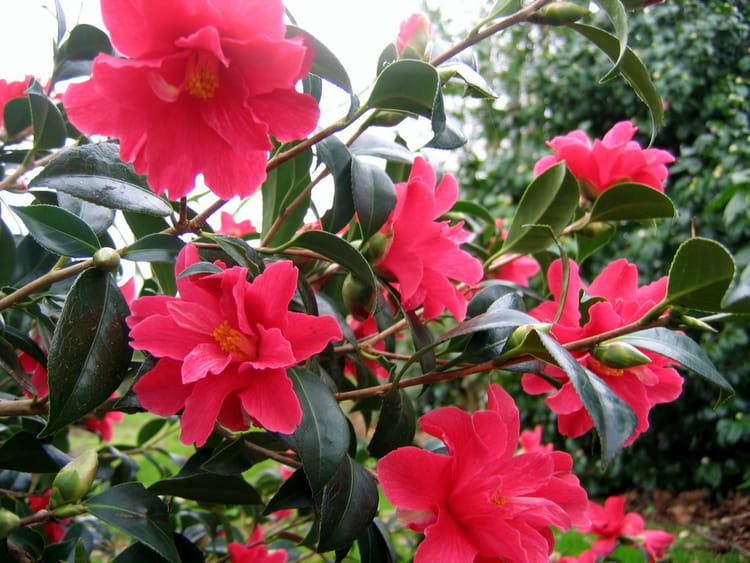 Bouquet de fleurs en hiver par malou troel sur l 39 internaute - Fleurs en hiver ...