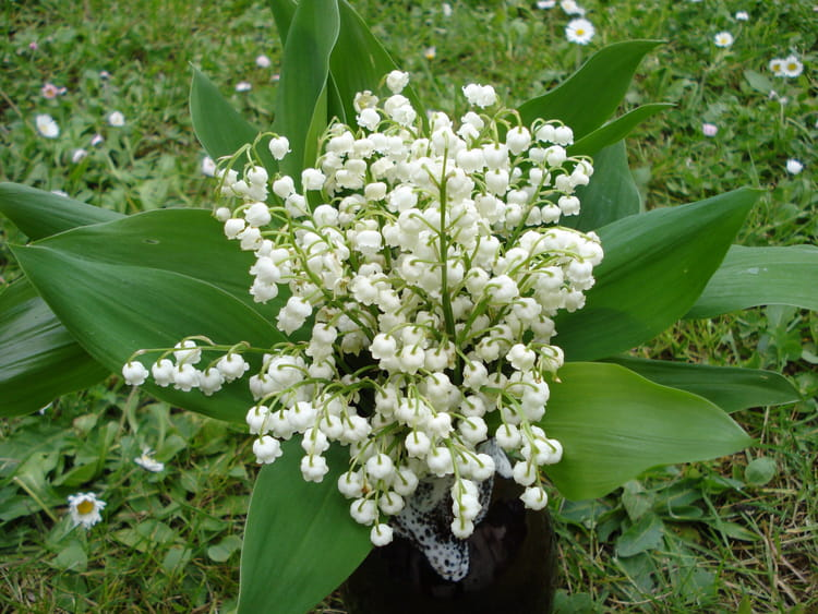 Bouquet de muguet du jardin par patrick bonnaud sur l - Bouquet de muguet photo ...