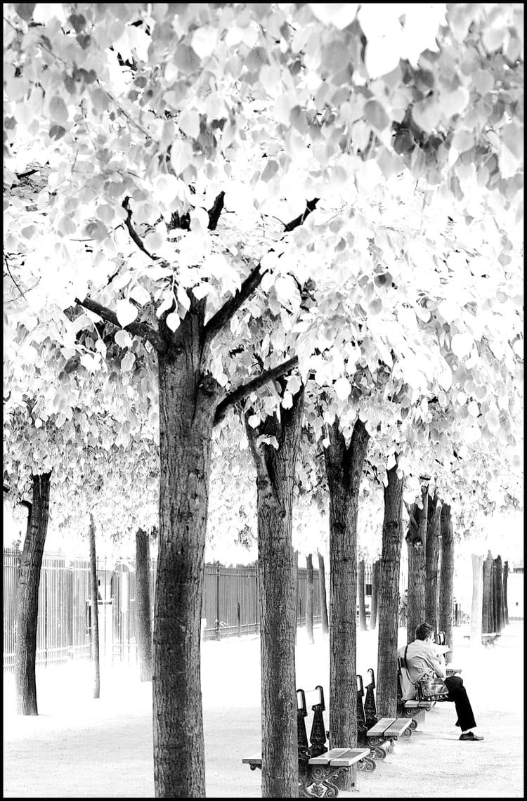 calme et s u00e9r u00e9nit u00e9 au sein d u0026 39 un parc  en noir et blanc  par bernard fauvel sur l u0026 39 internaute