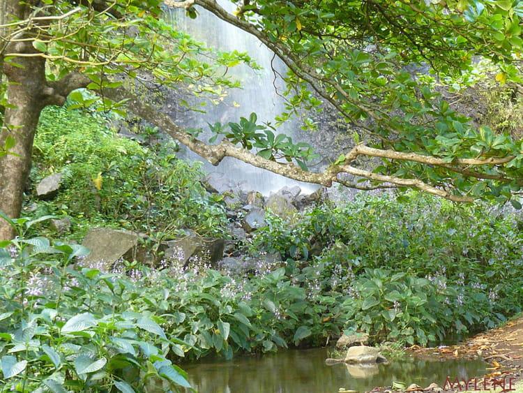 Cascade dans un jardin de jacinthes d 39 eau par delphine for Cascade d eau jardin