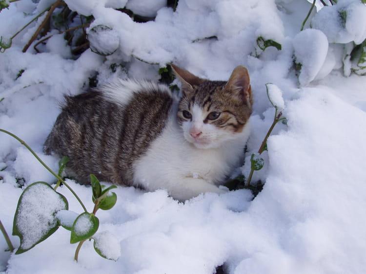 chat a la neige par fethi boutaba sur l 39 internaute. Black Bedroom Furniture Sets. Home Design Ideas