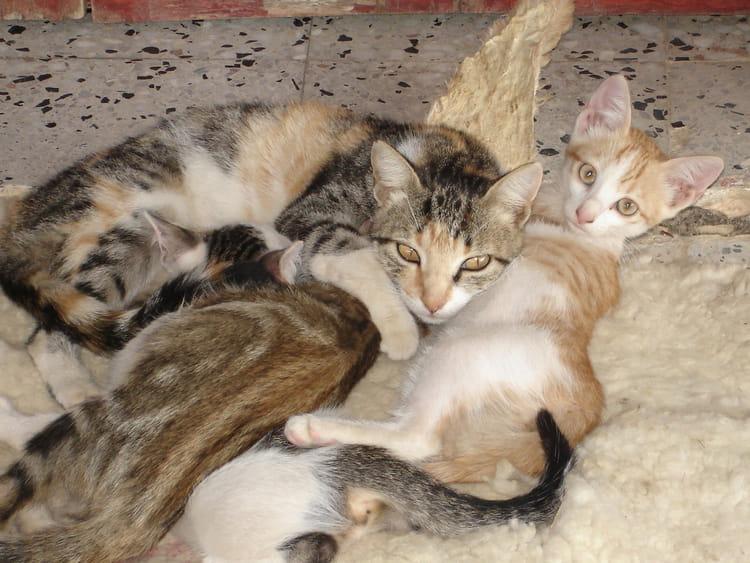 Chat de kabylie par aziz boussaid sur l 39 internaute - Salon de chat algerie ...