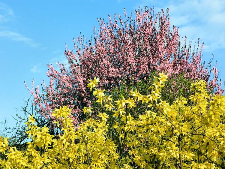 couleurs du printemps par raymond rochette sur l 39 internaute. Black Bedroom Furniture Sets. Home Design Ideas