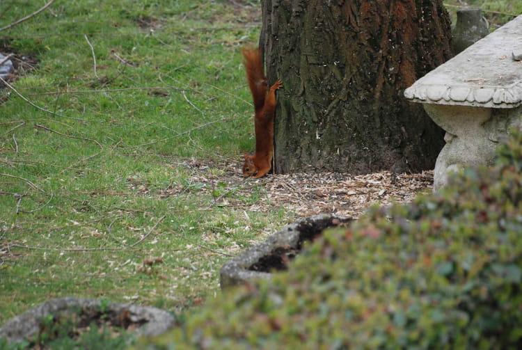 Dans mon jardin par michel desmet sur l 39 internaute - Dans mon jardin d hiver ...