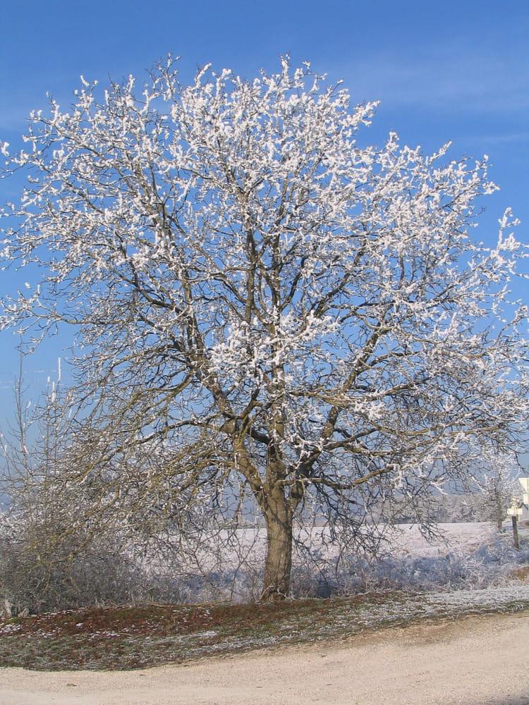 D coration d 39 hiver par mauricette zinte sur l 39 internaute for Decoration hiver