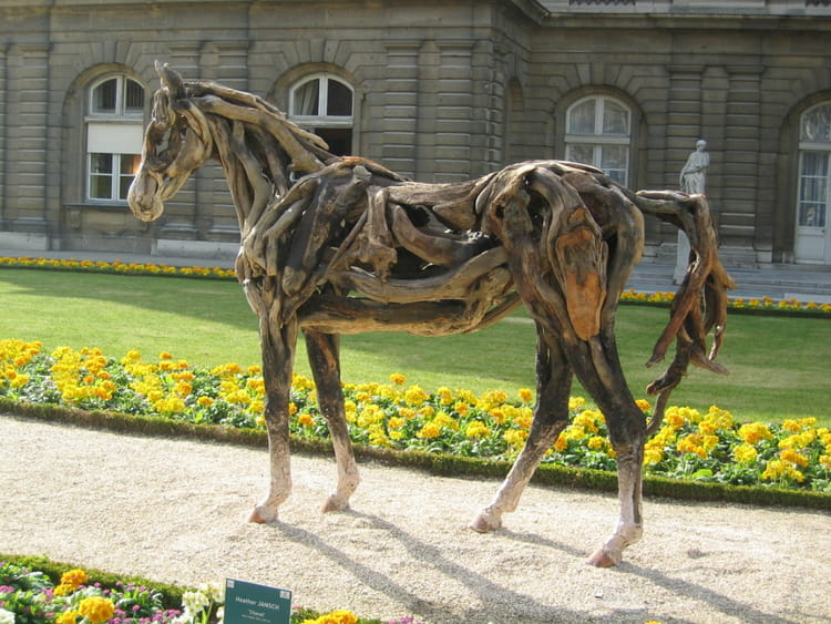photo drole cheval