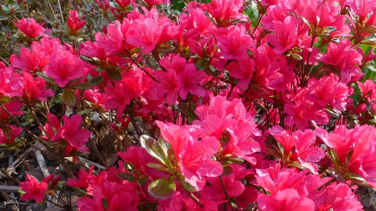 Du soleil des fleurs et le plaisir par jocelyne villoing sur l 39 internaute - Fleur du soleil ...