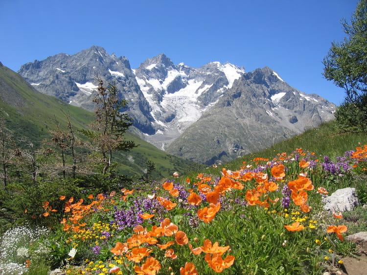 Scenery spring pictures fleurs de printemps en montagne - Fleurs de montagne alpes ...