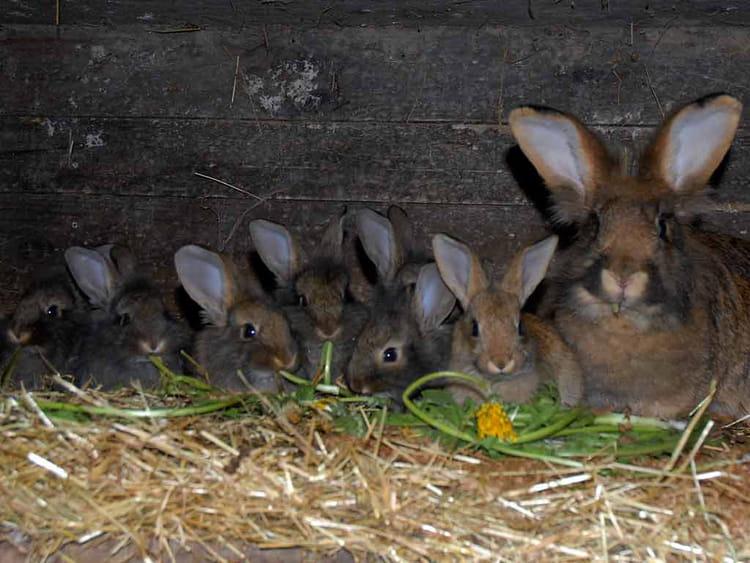 Famille lapin par sylviane natoli sur l 39 internaute - Comment se debarrasser des lapins sauvages ...