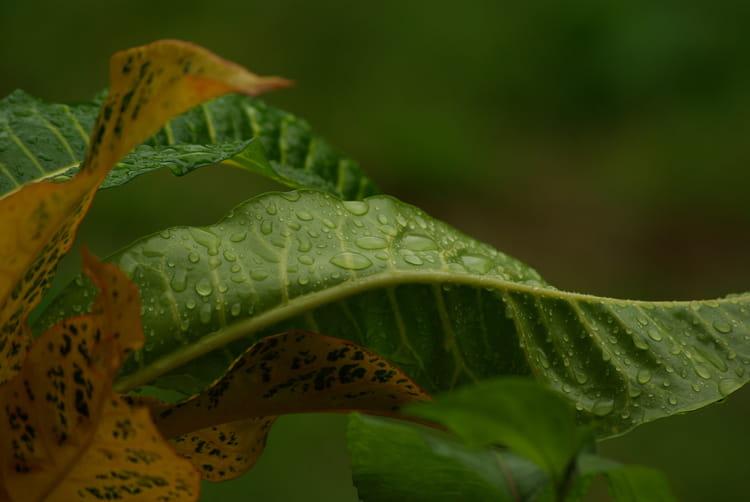 Feuilles sous la pluie par Fabrice PIERRAT sur L'Internaute