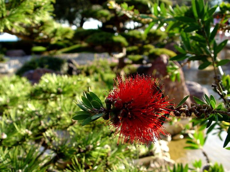 Fleur Au Jardin Japonais Par Baptiste Riviere Sur L Internaute