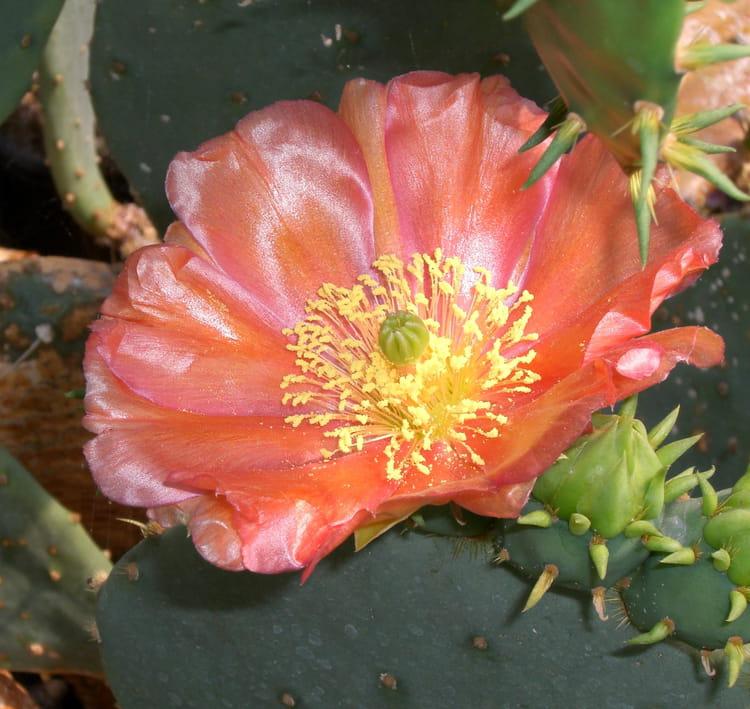 Fleur de cactus par Jean luc VIAULES sur L'Internaute