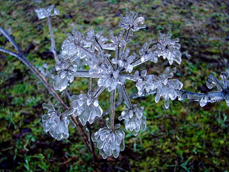 fleur de glace par robert buatois sur l'internaute